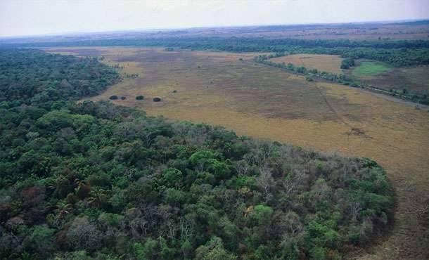 Uniós szabadkereskedelmi egyezmény miatt veszélyben az esőerdő