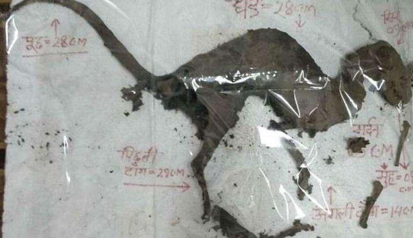 Talán egy dinoszaurusz viszonylag friss tetemét találtak Indiában