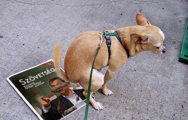Orbán befosatás-terve