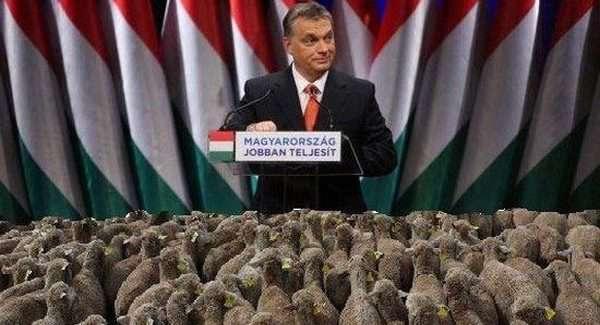 Nekünk Orbán kell, a tolvaj élősködő, mert ismer bennünket