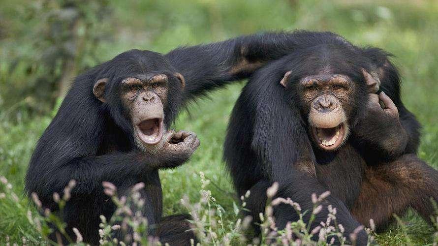 Lázár majmolja Orbánt - ő is fenyeget