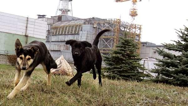 csernobili kuty