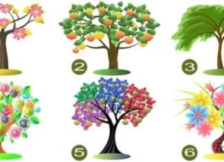 Biztosan tudja magáról? Válasszon egy fát és ellenőrizze!