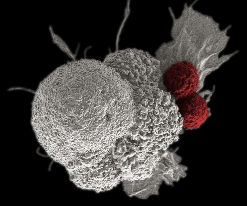 immunrendszer