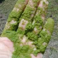 alga-balaton