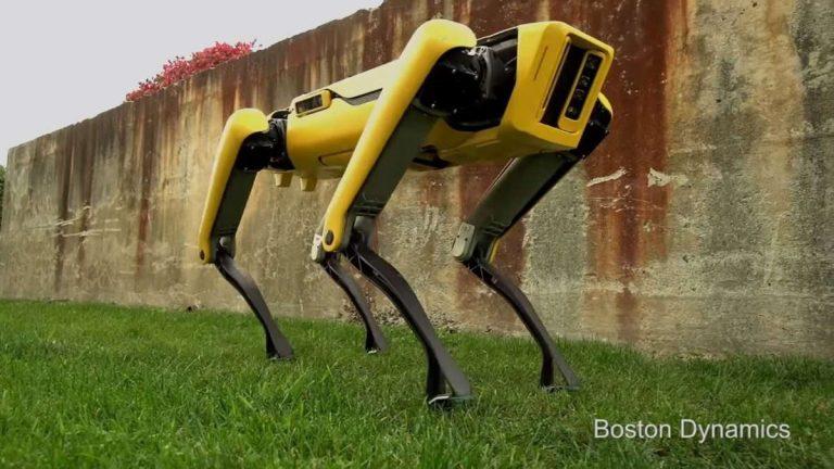 robot kutya