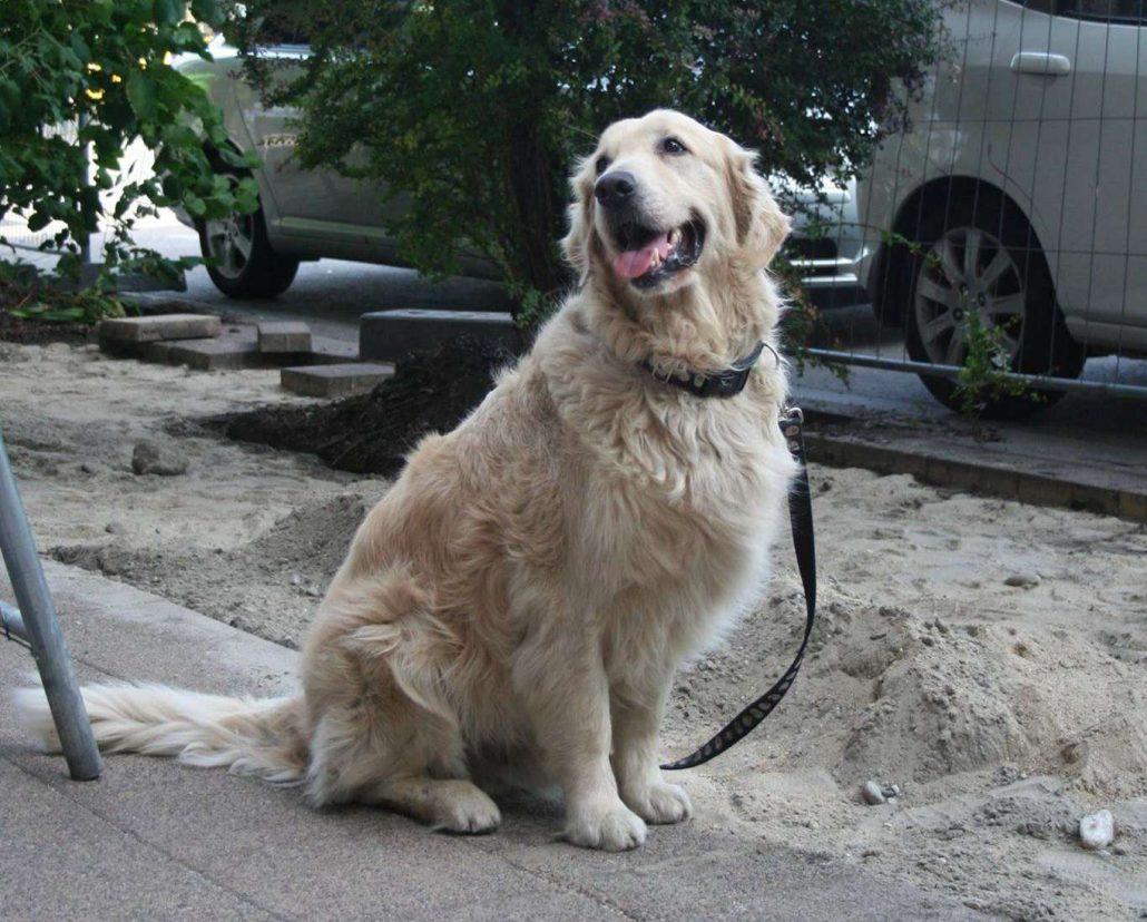 Kókusz kutya