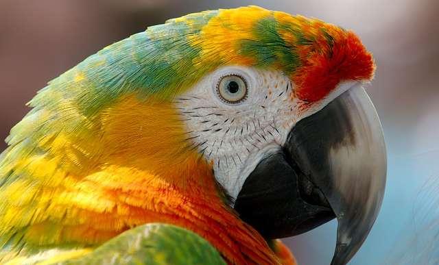 A Ficsak is beállt Fidesz-papagájnak - véleményterrort vizionál