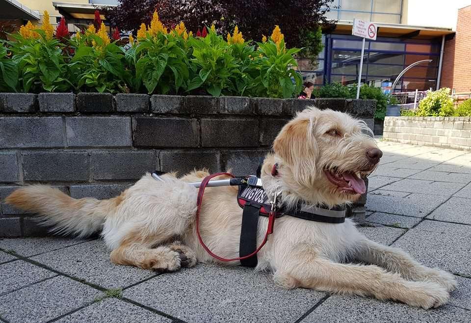 vakvezeto-kutya