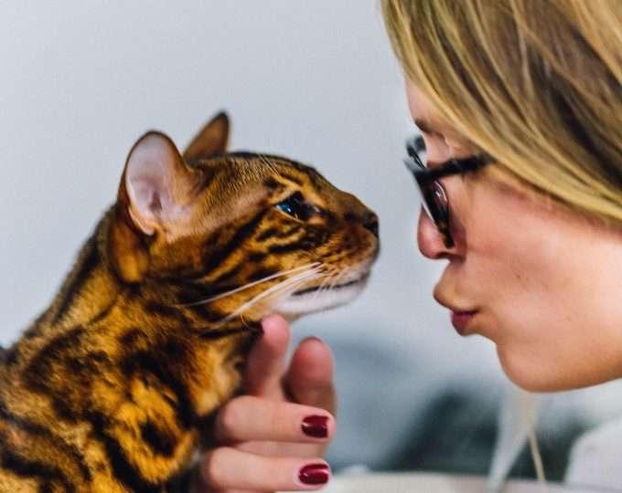 a macskák is kommunikálnak a gazdival