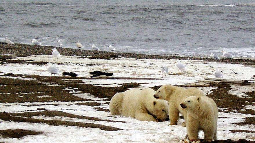 felmelegedés - Alaszka