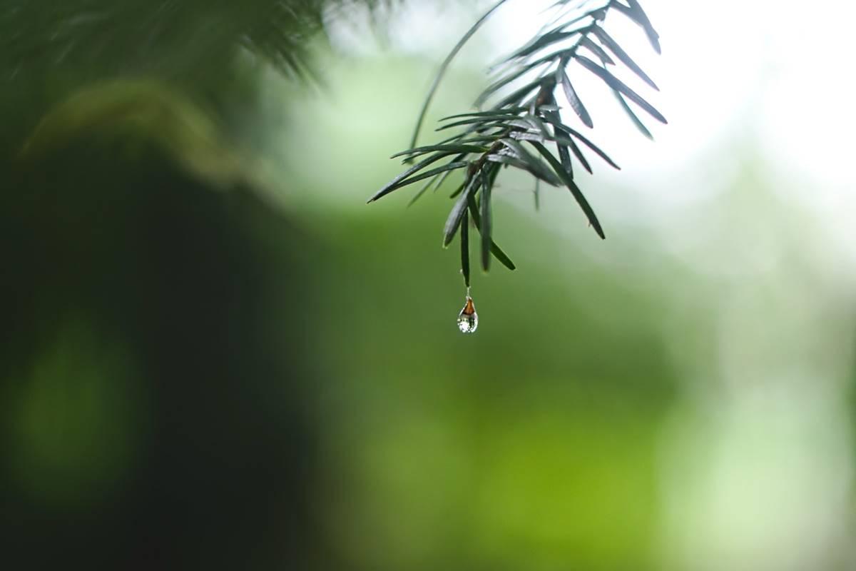 hétvége, időjárás, esős faág