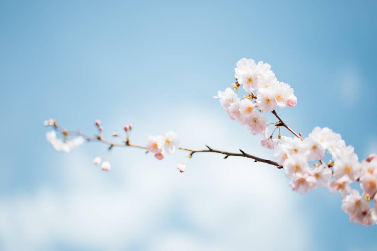 tavasz, horoszkóp, virágzó ág