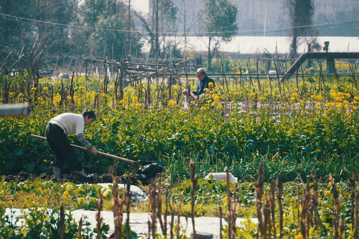 A képviselő kertészeti kisegítő munkás (napszámos) pozícióban dolgozza le büntetését: egy fillért nem fizetek a pintérségnek!